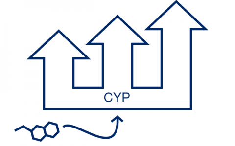 CYP enzyme induction image