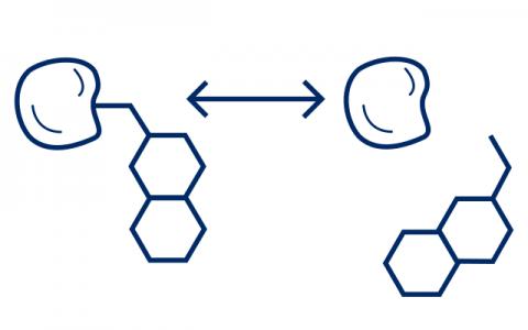 Protein Binding image